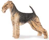 Airelade Terrier