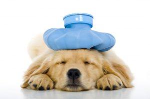 cachorro-filhote-doente-remedio-descansar-cuidados-tratamento-petrede