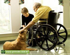 cachorro-terapia-idoso-petrede