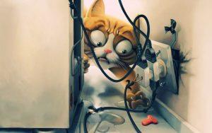 gato-choque-eletrico-eletricidade-perigo-cuidados-socorro-petrede