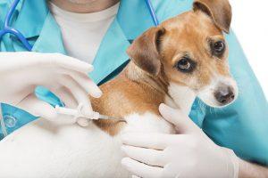 amigas-dos-animais-conheca-empresas-brasileiras-que-dispensam-testes-em-animais
