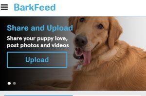 barkfeed-conheca-rede-social-feita-para-caes