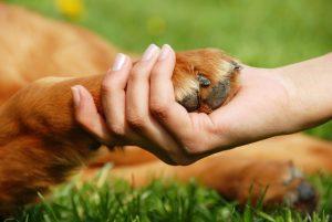 yellow dog paw and human hand shaking, friendship