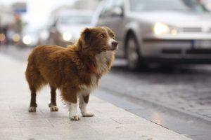 little redhead cute dog on the street