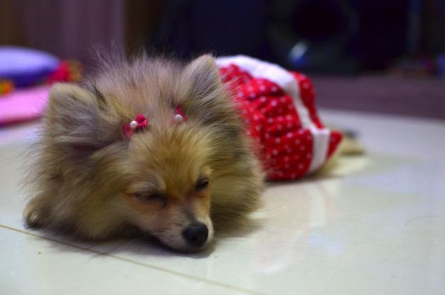lola-dormindo