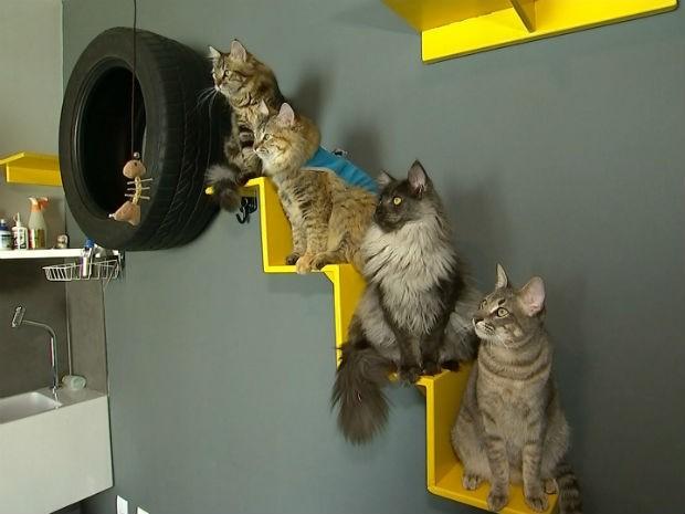 mercado-pet-gatos-g1-sorocaba_8