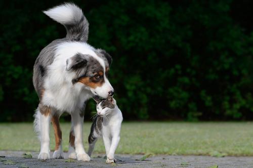 Amizade-entre-cachorro-e-gato